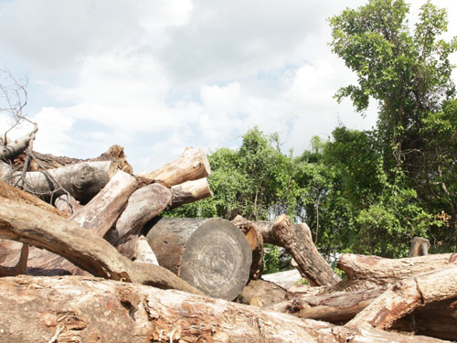 Industrial Tree Stump Root Branches Shredder Machine